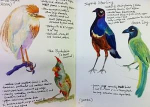 bird sketche
