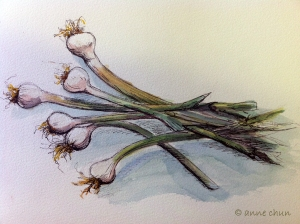 sketch of green onions