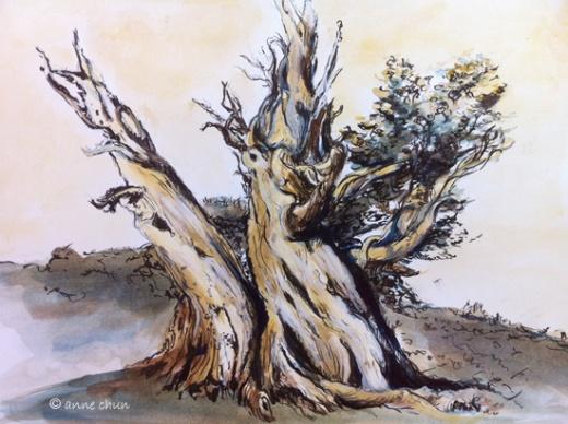 old trees illustration