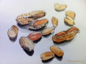 Drawing of peanuts