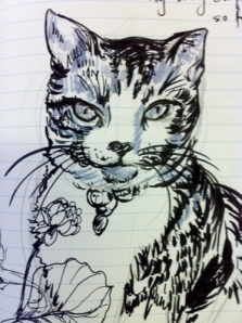 drawing of my cat