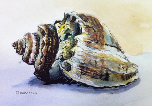 Seashell Drawing Anne S Art