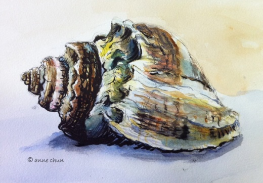 seashell drawing in ink