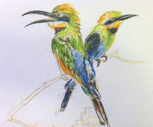 Sketch of 2 birds
