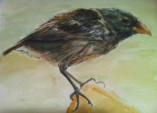 Crow sketch in ink