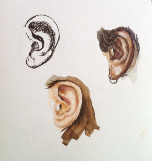 Drawings of the ear