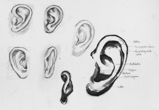 Sketches of the ear