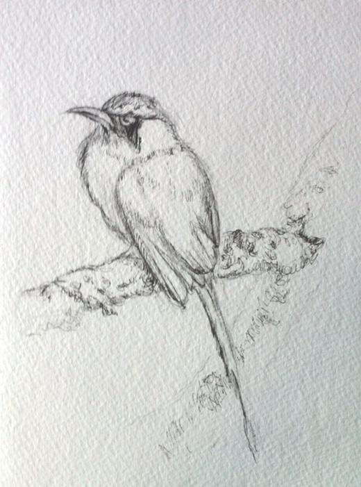 Bird sketch in ink